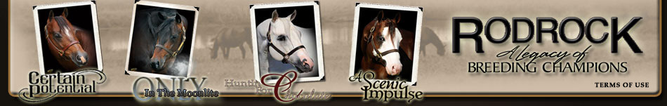 Rodrock Stallions Customer Horses For Sale